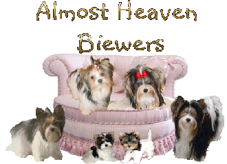 What We Feed Our Biewer And Yorkies And Their Pups